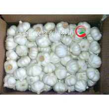 Fresh Normal White Garlic (5.5cm and up)