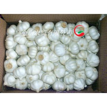 2015 Fresh Pure White Garlic