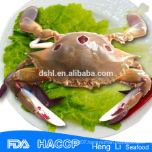 Frozen whole crab seafood