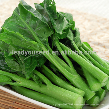 NCS03 Marcher quality chinese flowering cabbage seeds for growing