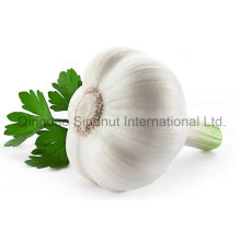 New Fresh White Garlic in (4.5cm-6.0cm)
