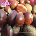 chestnuts 2017 fresh hot exporter chinese chestnut importer