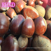 chestnuts 2017 fresh hot exporter chinese chestnut importer