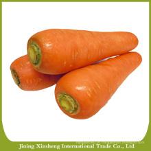 Cenouras vermelhas
