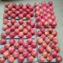 Qualité supérieure de la pomme Qinguan rouge fraîche chinoise