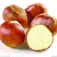 Fresh Chestnut Glossy Health