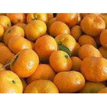 Bajo precio mandarina