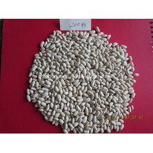 Long Type White Kidney Bean