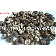 2016 Colheita 3-4cm Seco Shiitake Mushroom