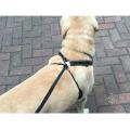 Pet Supplies Reflective Dog Harness No Pull Mesh Pet Dog Harness Vest