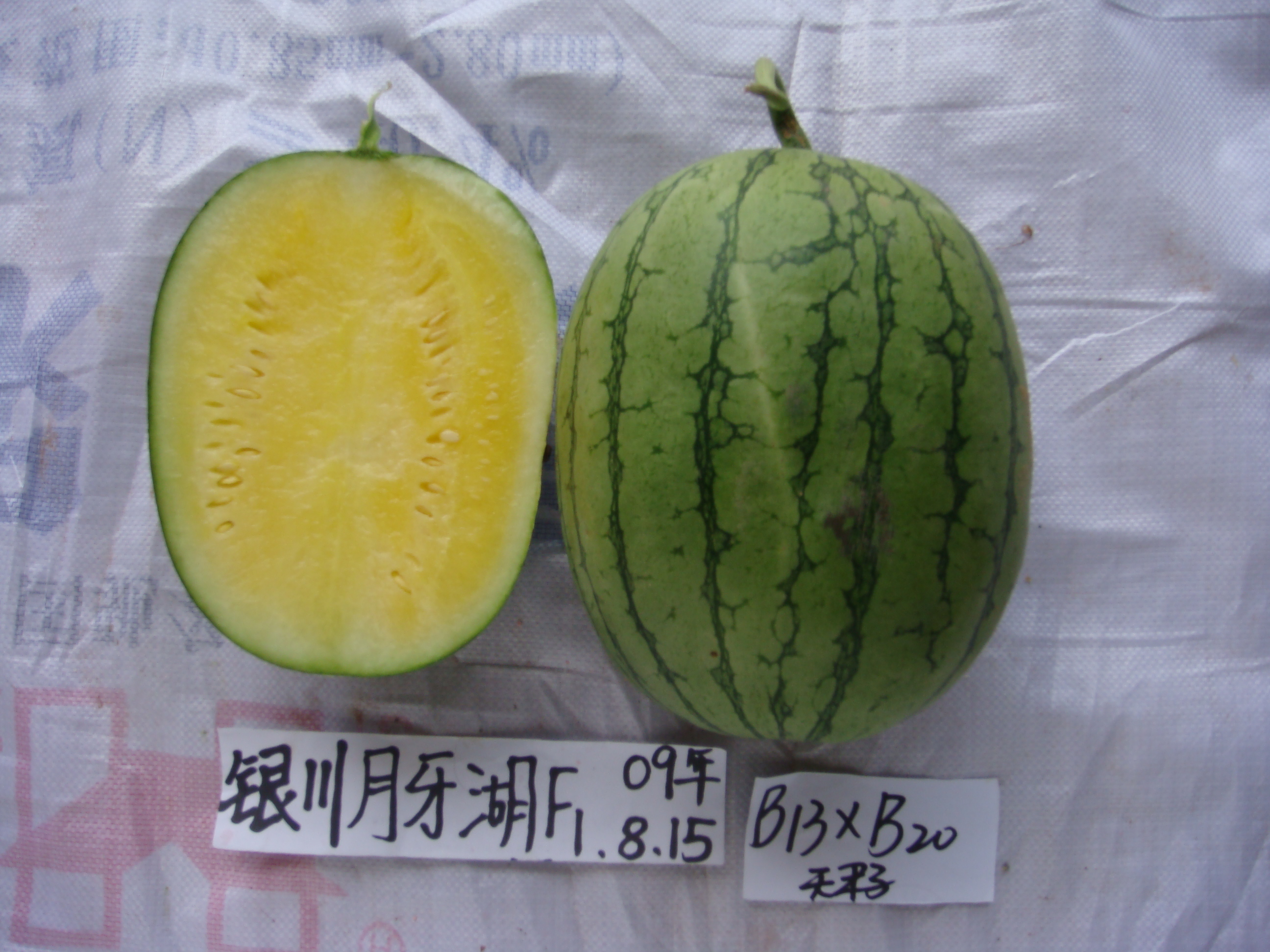 Best Yellow Seedless Watermelon Seeds