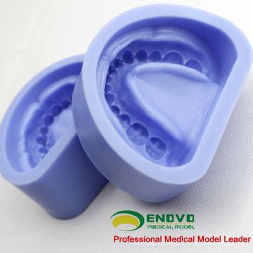 DENTAL17 (12597) modèle standard de prothèse en caoutchouc de silicone pour la préparation artificielle de dentition