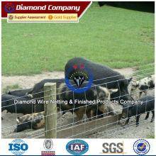 Esgrima de cabra ISO, BV, SGS