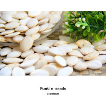 Best quality shine skin pumpkin seeds Grade AA from Inner Mongolia