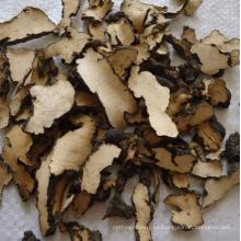 Polyporus de hierbas medicinales de alta calidad