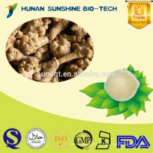 2015 Produit chaud extrait de Pseudo-ginseng en poudre 10% -80% Notoginsenosides