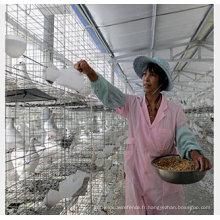 Cage à volaille de cage d'oiseau de cage de poulet de couche galvanisée