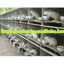 Nuevo diseño de jaulas de conejo de acero inoxidable