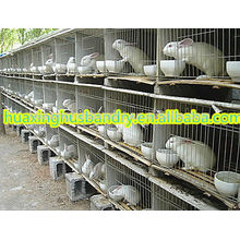 new design stainless steel rabbit cages