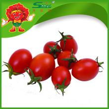 Tomate vermelho cereja fresca