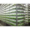 le haut PPFD a mené des lumières de croissance pour le tube mené par légumes t5 élèvent la lumière pour la plante
