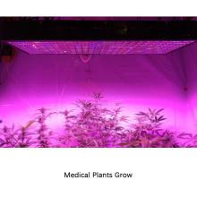 Dasiy Chain 1200W LED Plant Light pour plantes à orchidées