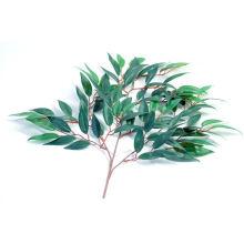 Huile Essentielle d'Eucalyptus 50ml