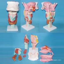 Modelo Humano de Biologia de Alta Qualidade para Ensinar (R070112)