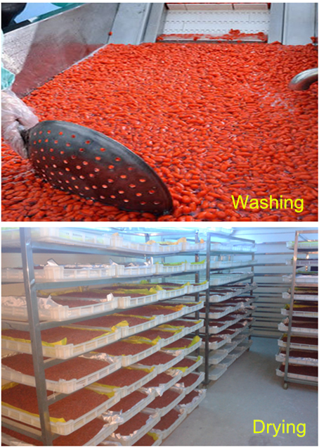 Goji berry washing