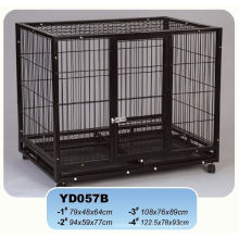 Golden Supplier and Golden Square Black Metal Cage