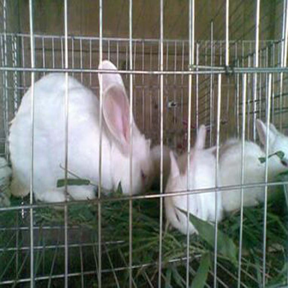 what size wire for rabbit cage