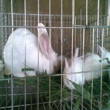 Rabbits Raising Stainless Steel Welded Mesh Cage