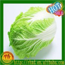 proveedor chino de col fresca / exportador de vegetales en china col china fresca