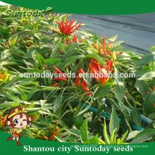 Suntoday простое управление зеленый красный верхней острого перца до перца продажа семян(22003)