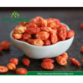 Freezer Dried red wolfberry/ Goji