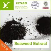 Pó do extrato de algas orgânico 100% ou floco