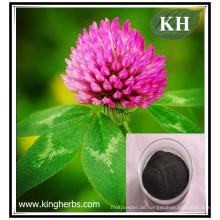 High Natural Isoflavone 20% Rotklee-Extrakt