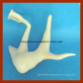 Auditory Ossicle Medical Model, Ear Model (Anatomical Model)