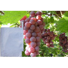 Manufacturer Supply Biodegradable Wax Coated Grape Grow Paper Bag Fruit Protect