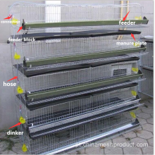 Equipamentos para poulytry Farm / Layer Chicken Cage on Sale