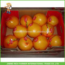 Meilleur fournisseur chinois Meilleur produit pomme de miel aux fruits frais