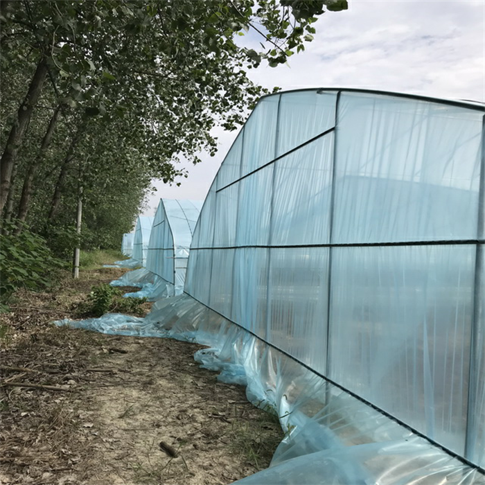 Singe Tunnel Greenhouse