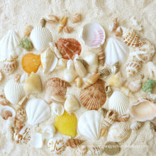 spring crafts-seashell decoration