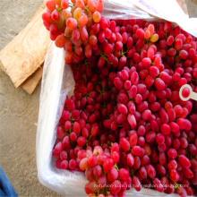 свежий красный глобус цена винограда