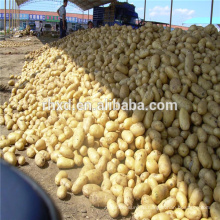 Спонта ,Никола ,леди розетта свежего картофеля