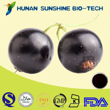 High Quality Natural Black Currant Seed Extract,Black Currant P.E.