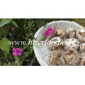 Champignons shiitake séchés avec bâton (fleur blanche)