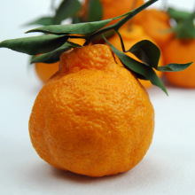 China for Offer Fresh Apricot,Organic Navel Oranges,Mandarin Orange From China Manufacturer Orange Type Fresh Oranges for sell export to Finland Importers