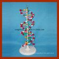 Modelo de estrutura de dupla hélice de DNA grande para educação