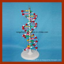 Modelo de estructura de doble hélice de ADN para la educación